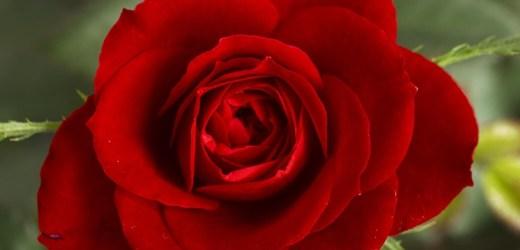 flowers_aromas02