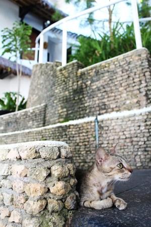 Nami Resorts 28