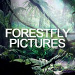 (3) Forest Fly Pictures Logo