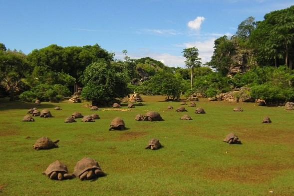Mauritius Honeymoon - Francois Leguat Reserve - Pinterest