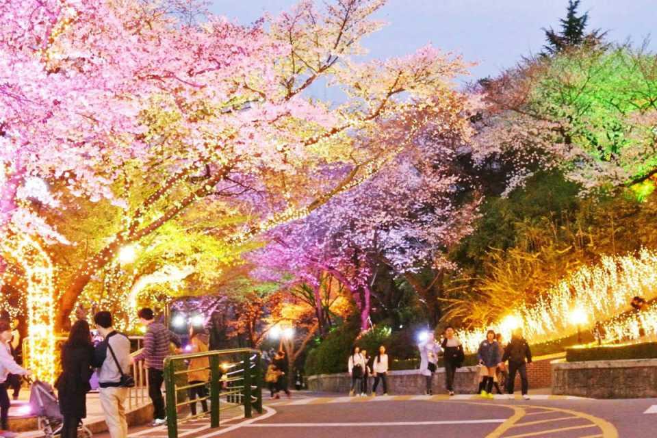 KoreaHoneymoon-NamsanPark-Myeong-dong
