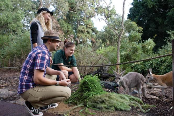 Photo via Perth Zoo