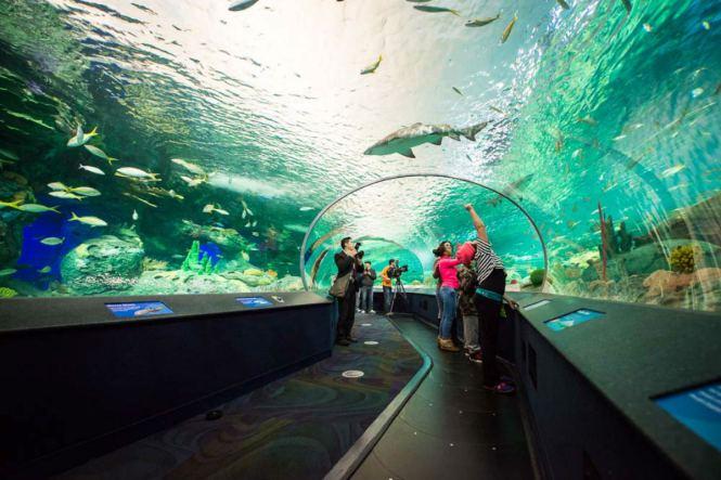 TorontoHoneymoon-ripleysaquarium-Torontoist