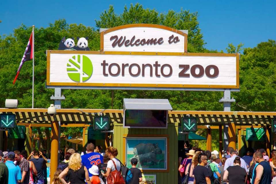 TorontoHoneymoon-torontozoo-Expedia