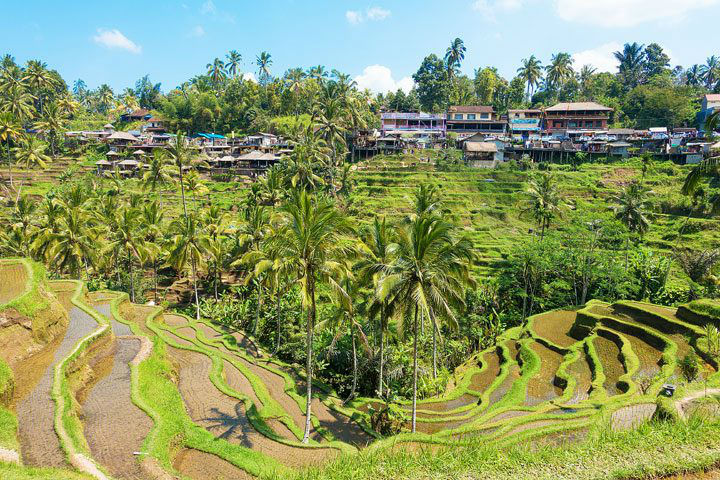 tegallalang rice-terraces bali indonesia