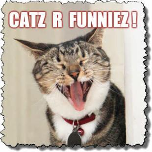 Funny Cats! LOLcats! - Gifts featuring cat humor - TxCowboyDancer Designs
