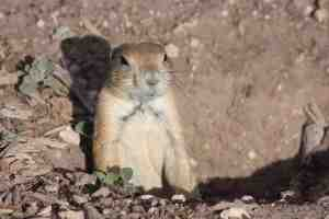 Prairie Dog Town remains a favorite spot for kids in Lubbock.