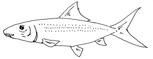 Unrepresented Fish Families