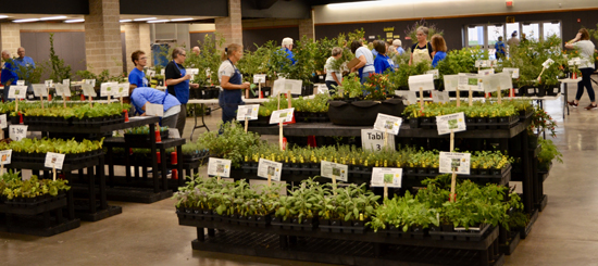 Fall Plant Sale at the Belton Expo