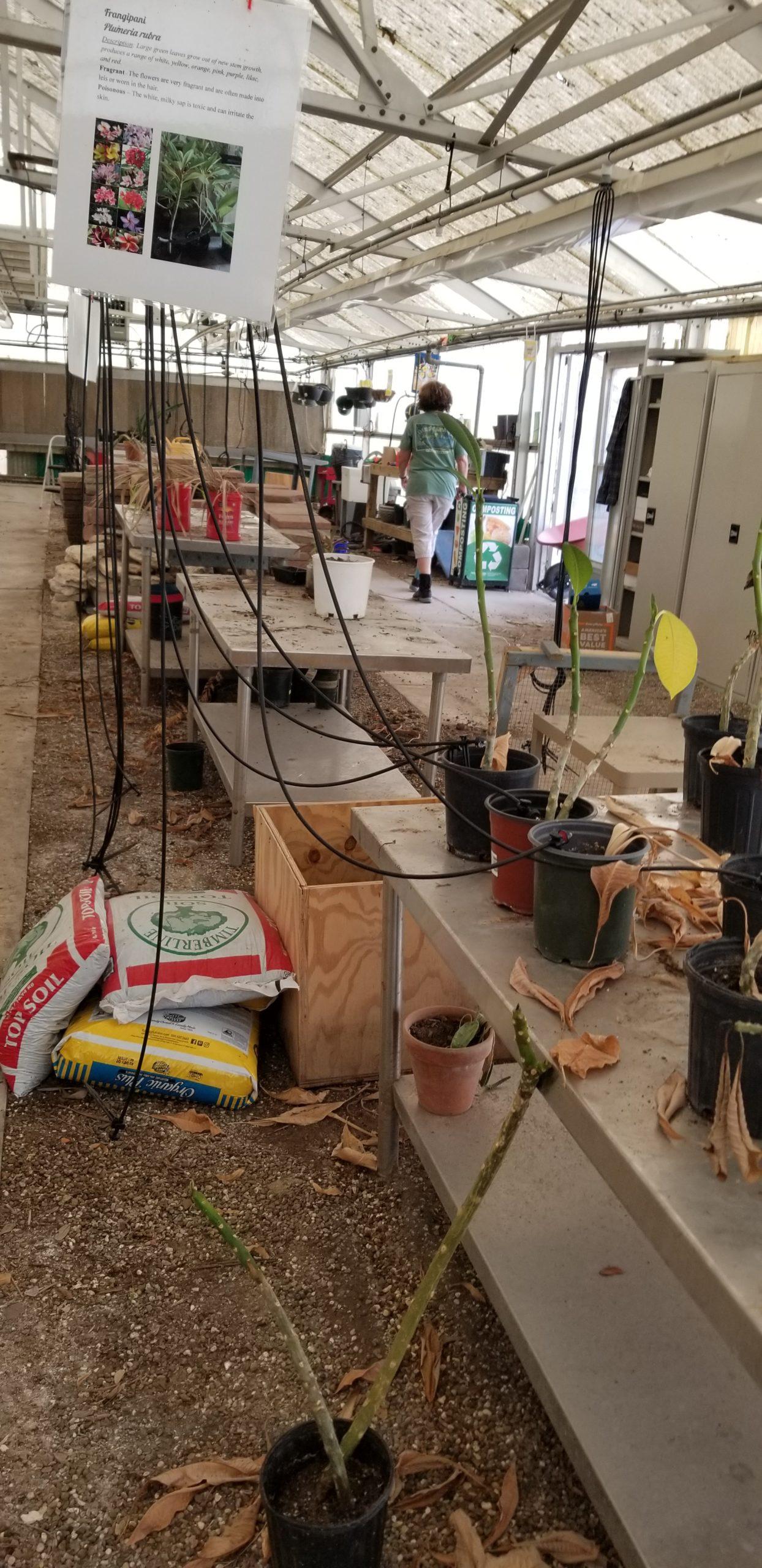 Greenhouse RHS_2