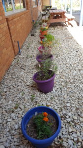 Boys & Girls Club Planted Pots