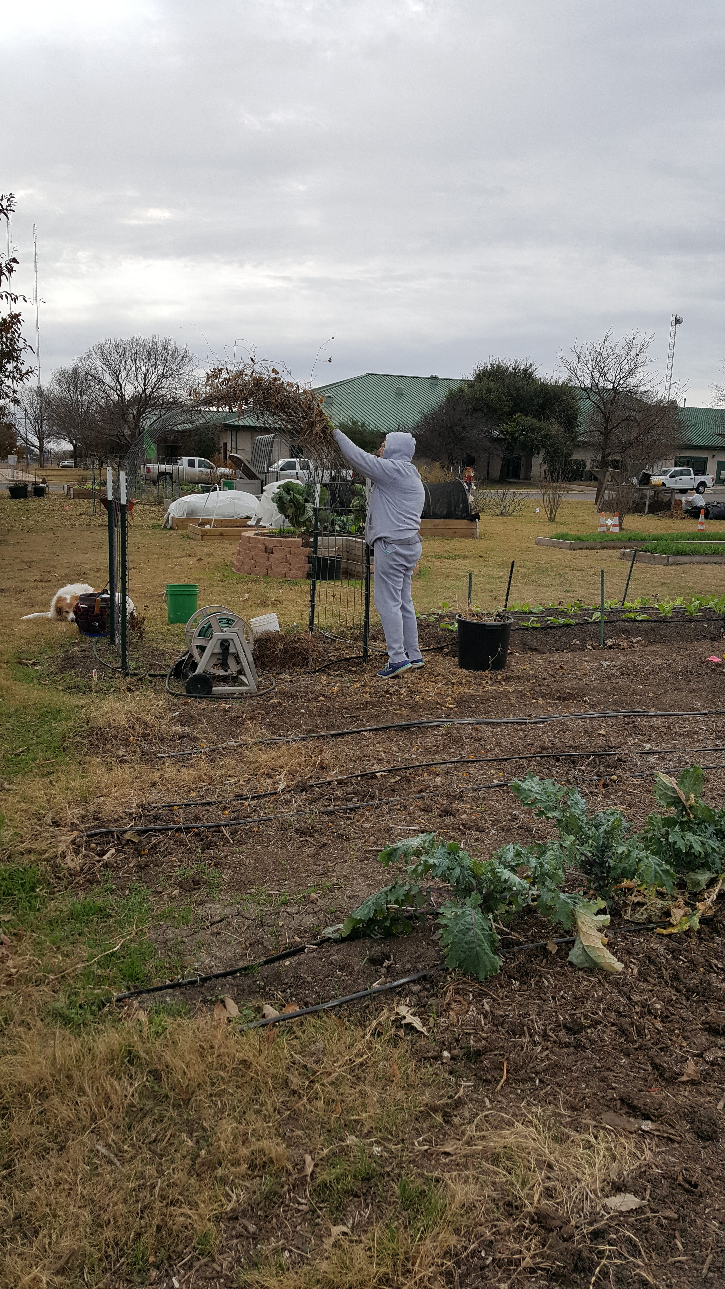 THE PERIOD ENDING 12/31/2016 | Williamson County Master Gardeners