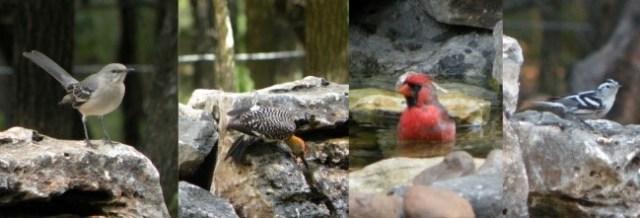 visiting-birds