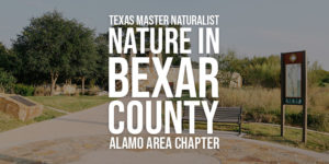 Nature in Bexar County - Linked