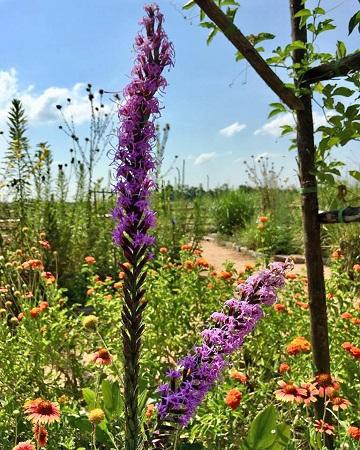 Hummingbird Garden2-JHems