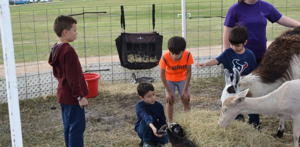 SNF 2018: Petting Zoo