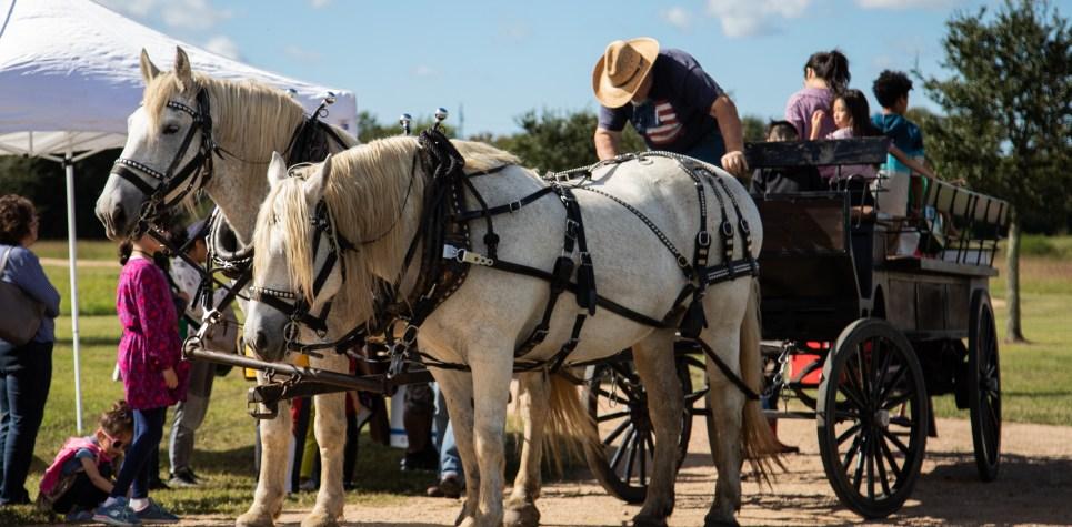 SNF 2018: Horse drawn wagon