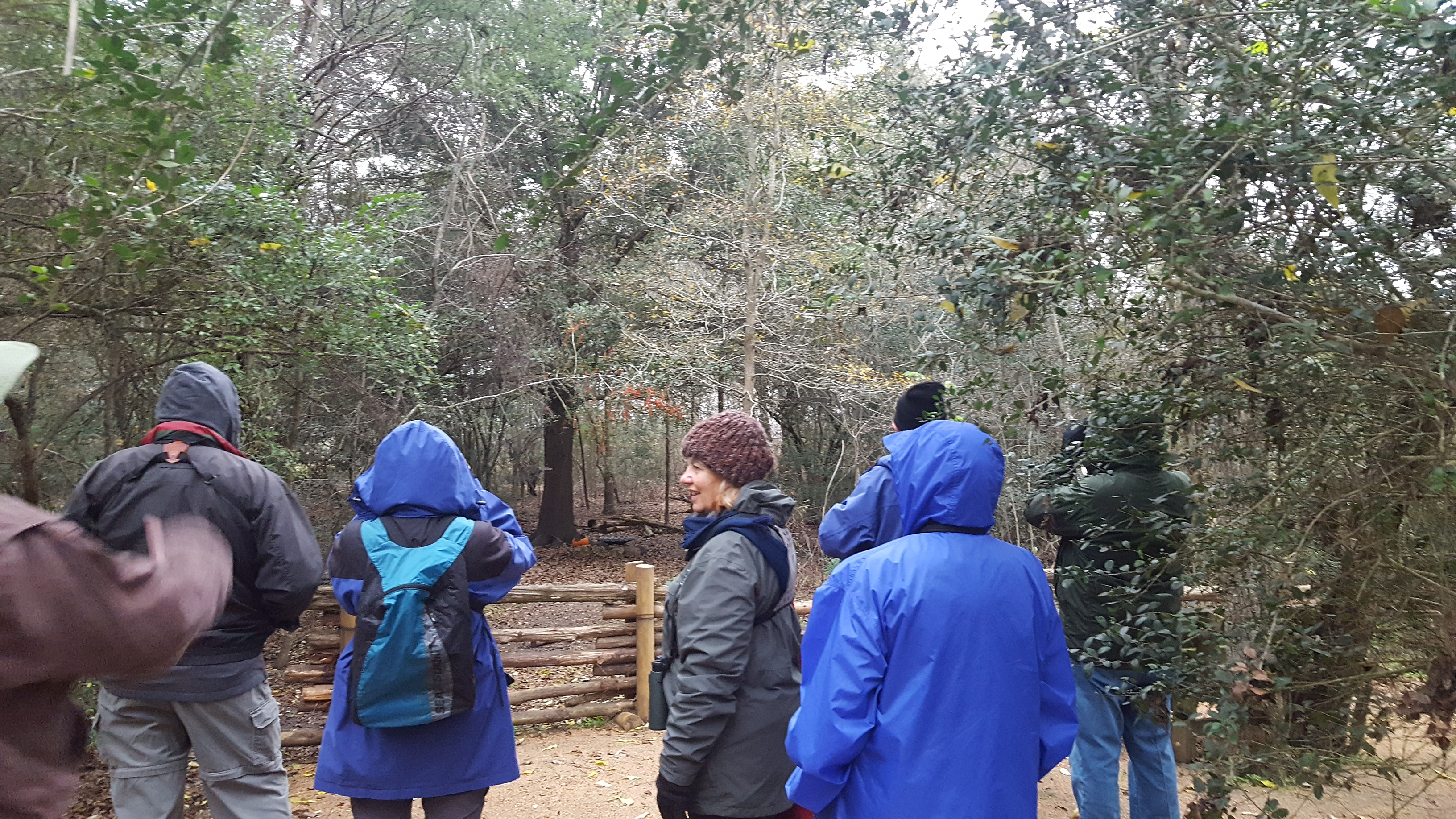 Bird Walk Seabourne Creek Nature Park Photo by Kimberly Farou 1/2/19