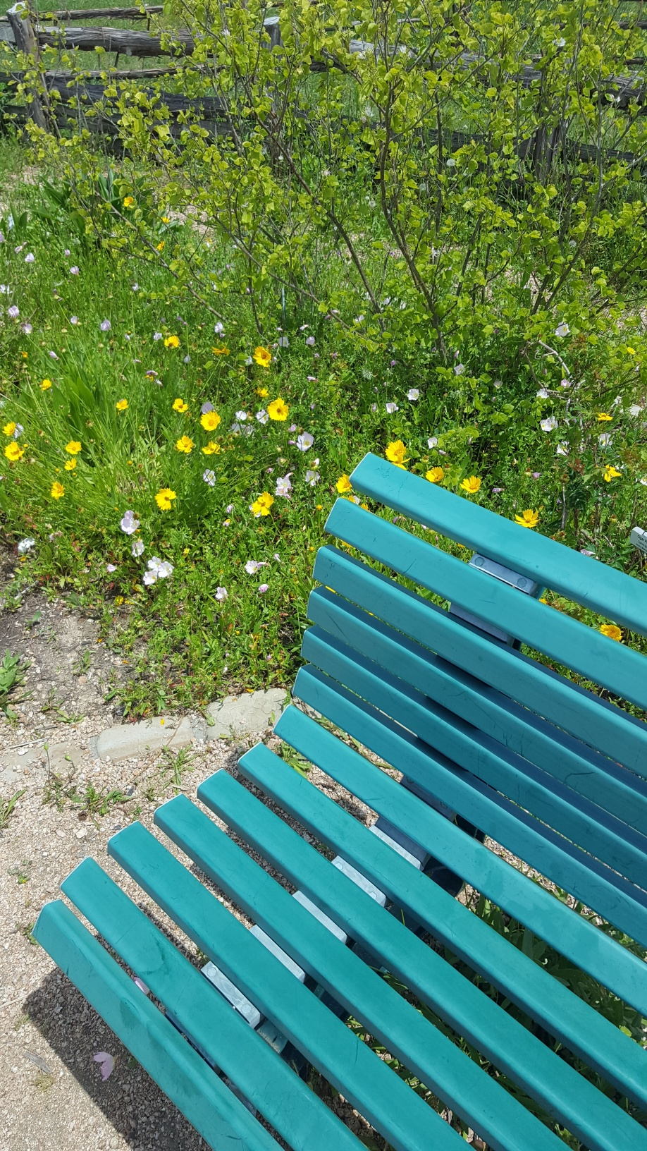 Seabourne Nature Park Butterfly Garden on Earth Day 2019 by TMN Kimberly Farou (8)