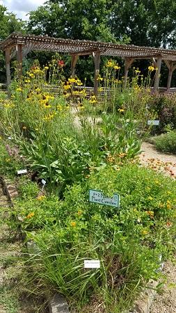 9 plus 2 Native Plant Garden
