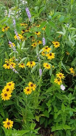 Pocket Prairie Garden-resized June 2019-LTrenta