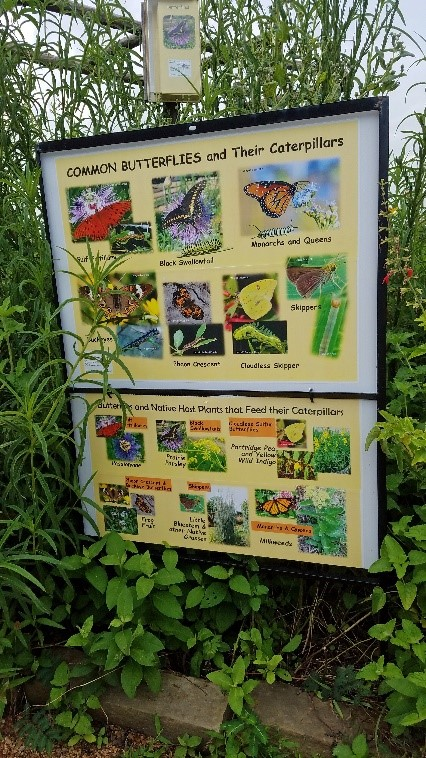 Sign outlining butterflies that can be found at Seabourne Creek Nature Park