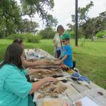 Discovery Trunk at Open House - animal hides
