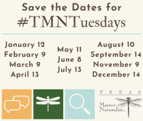 All events for #TMNTuesdays