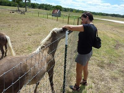 Wimberley - horses