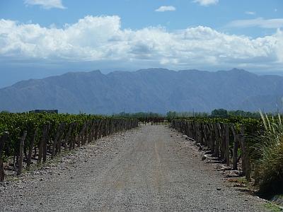 Ruca Malén vineyard