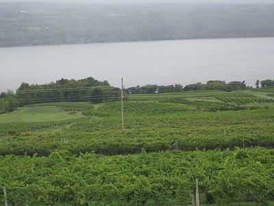 Atwater Estate - vineyard