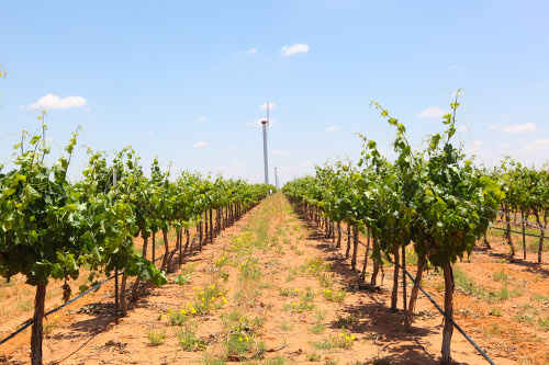 Lost Draw Vineyards in the Texas High Plains AVA