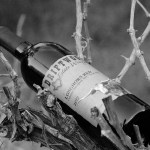 Review of Driftwood Estate Winery Longhorn Red 2012