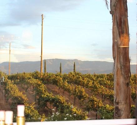 Vineyards of Carter Estate Winery and Resort
