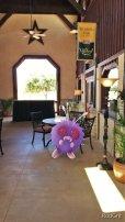 Pokemon at Wedding Oak Winery at Wildseed Farms