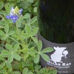 Cellar Rat Sangiovese 2015 Wine Review