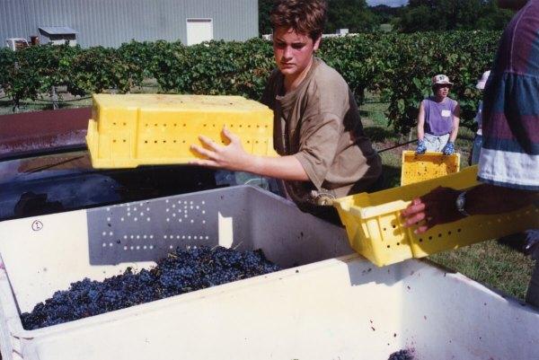 Paul Mitchell Working Harvest
