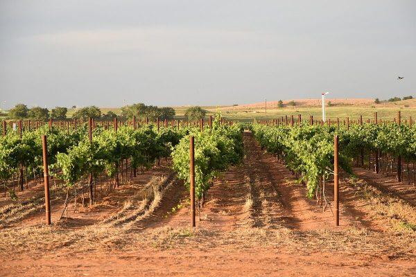 Whitehouse Vineyards