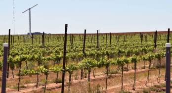Wind machine in vineyard – helps to protect grapevines from spring frost episodes by moving warmer air from above to displace colder air near the ground