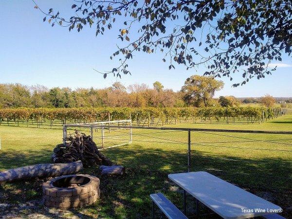 TF Vineyard & Winery vineyard
