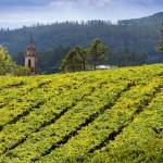 The Wines of Rias Baixas