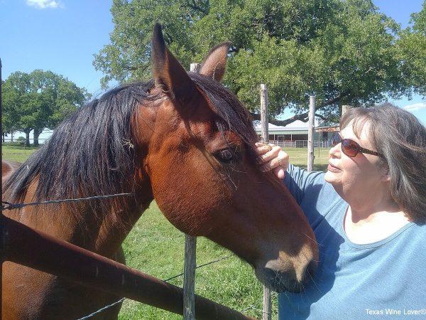 Horse and Irene
