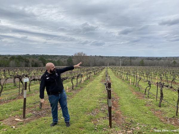 Kiepersol vineyard