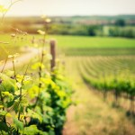 Texas Grapevines by the Numbers: What's Trending Up, What's Trending Down, and What It Means for Texas Wine