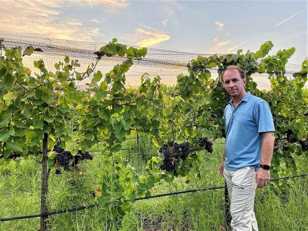 Fall Creek Vineyards Harvest with Sergio Cuadra