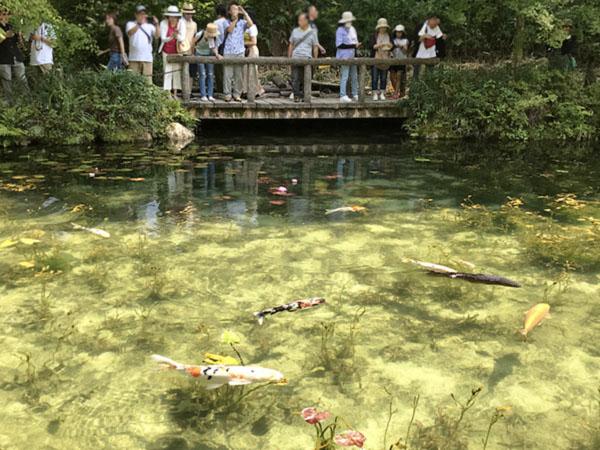 奥の小さな橋と手前の透明度の高い池の風情が印象派の巨匠モネの絵に見えるらしいのです。