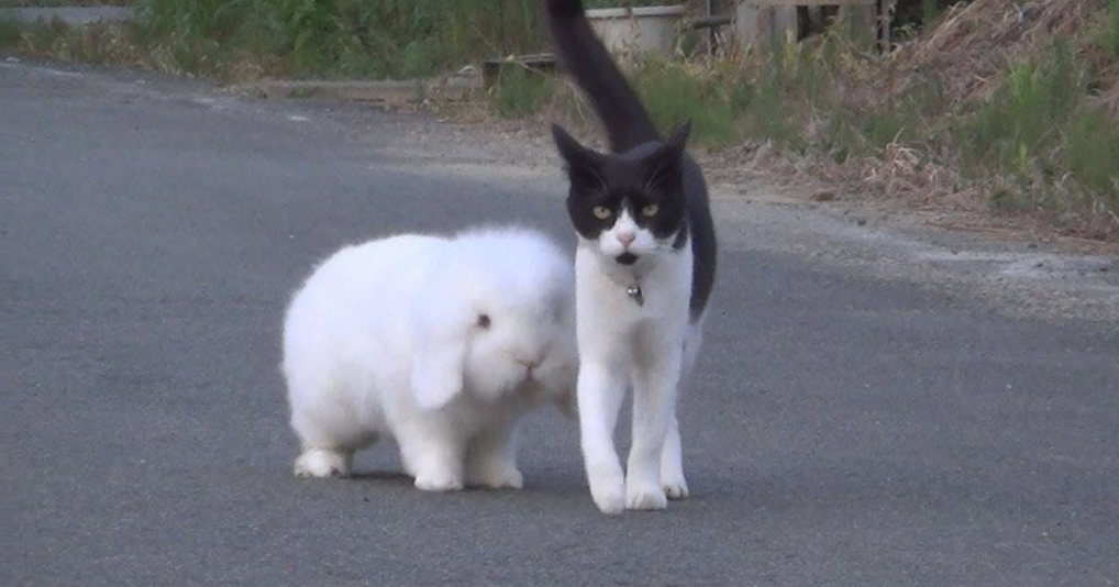 Мама-кошка воспитывает сына-кролика: забавное семейство