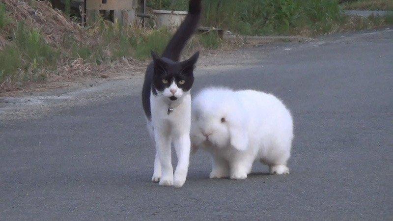 Забавное семейство: мама-кошка воспитывает сына-кролика