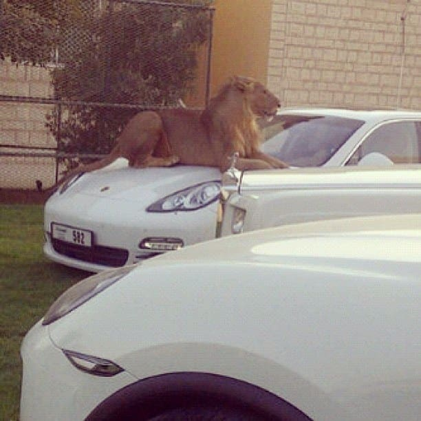 20 безумных вещей, которые в Дубае считают абсолютно нормальными