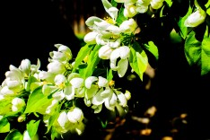 Blooming-Tree-(Optimized)